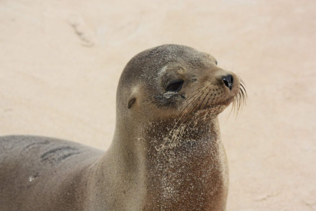 the-galapagos-islands-sea-lion