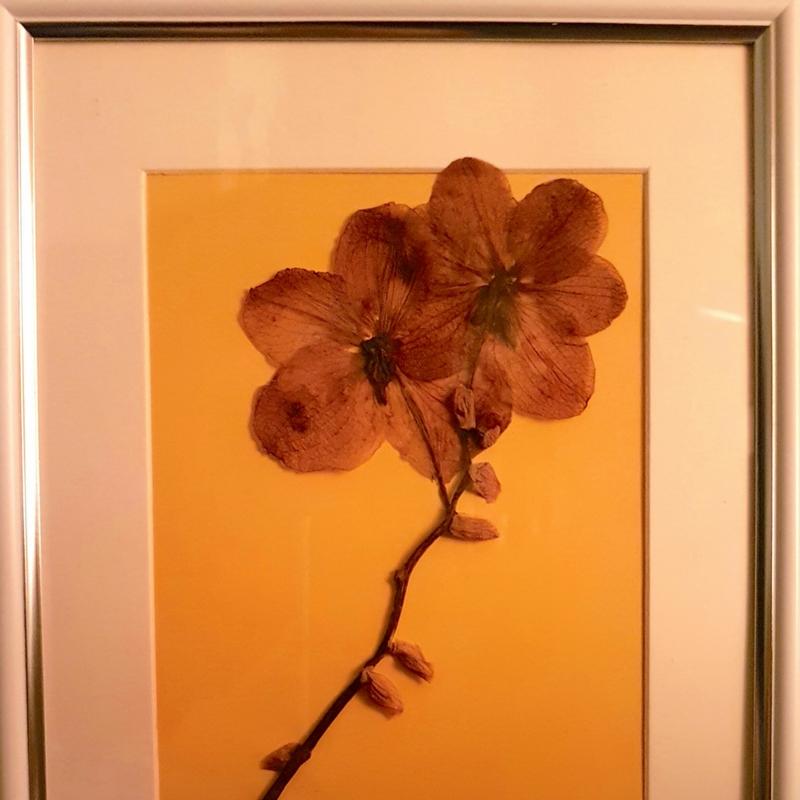 Pressed-Flower Gift