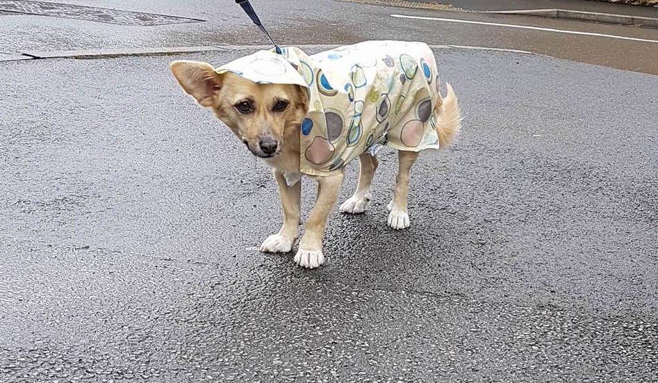 fifi wearing the coat