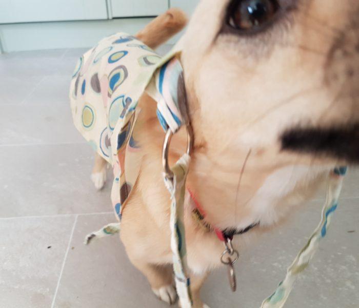 Homemade Dog Coat