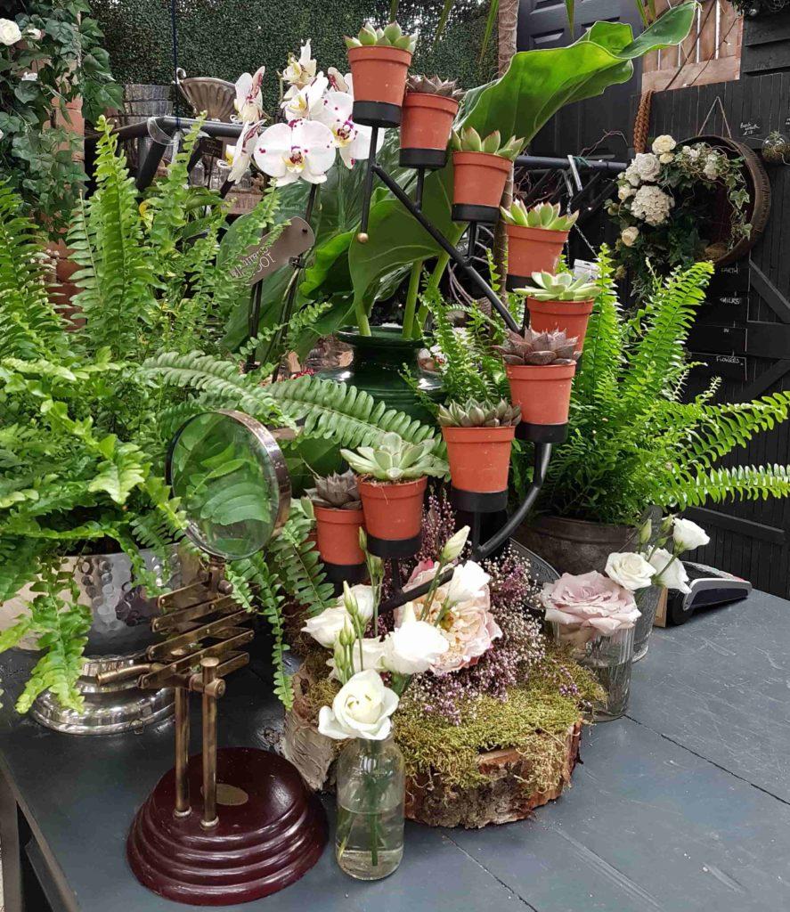 beadlam plants