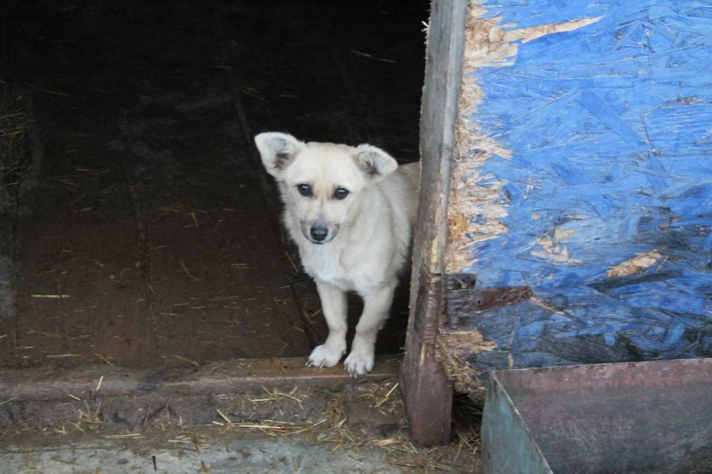 rescue shelter romania