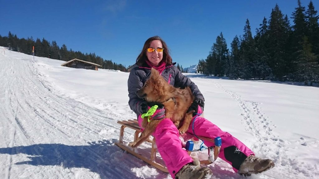 sledging with dog