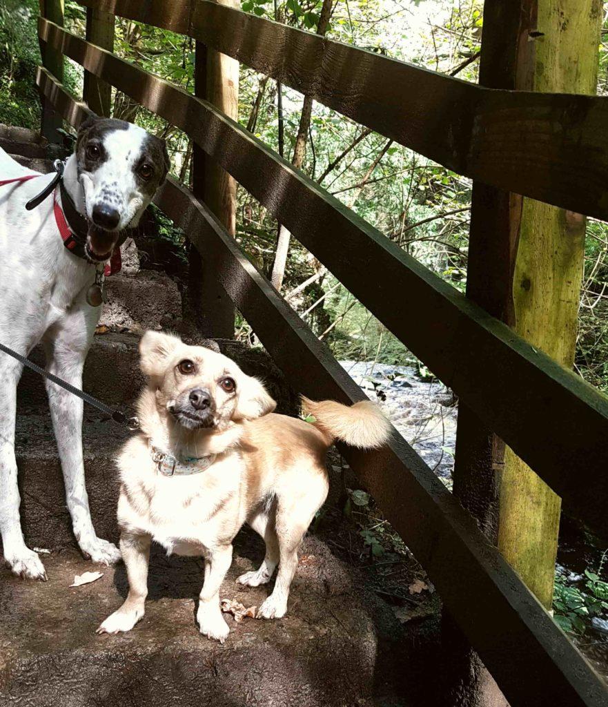 dogs ingleton