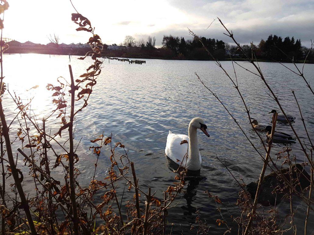 swan yeadon