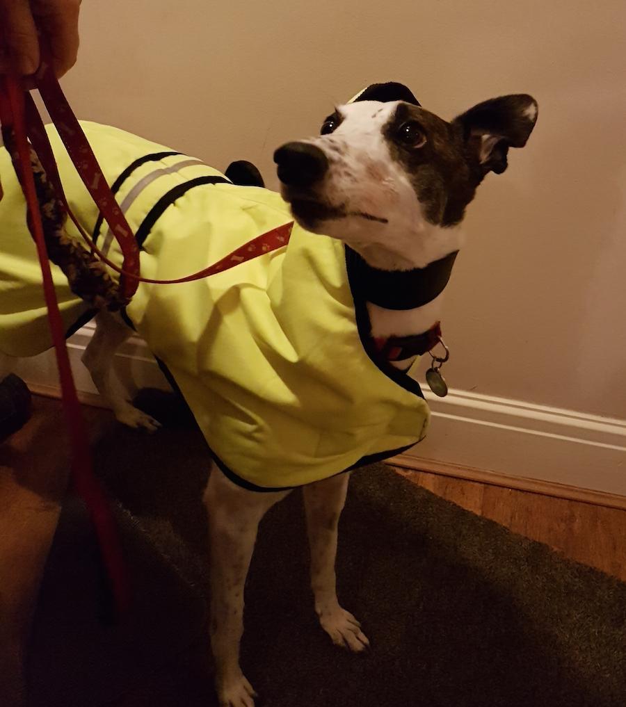 dog-coat-yellow