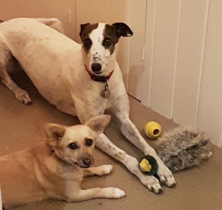 dog-friends