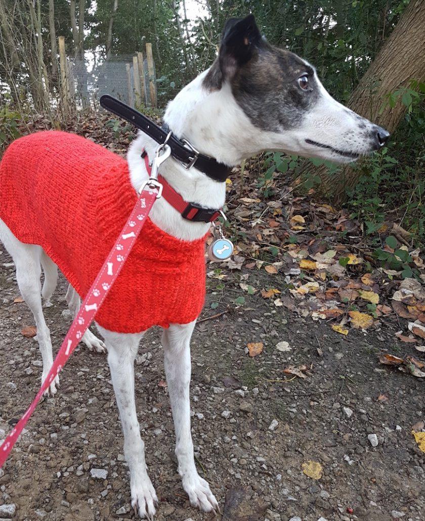 knitted-dog-coat