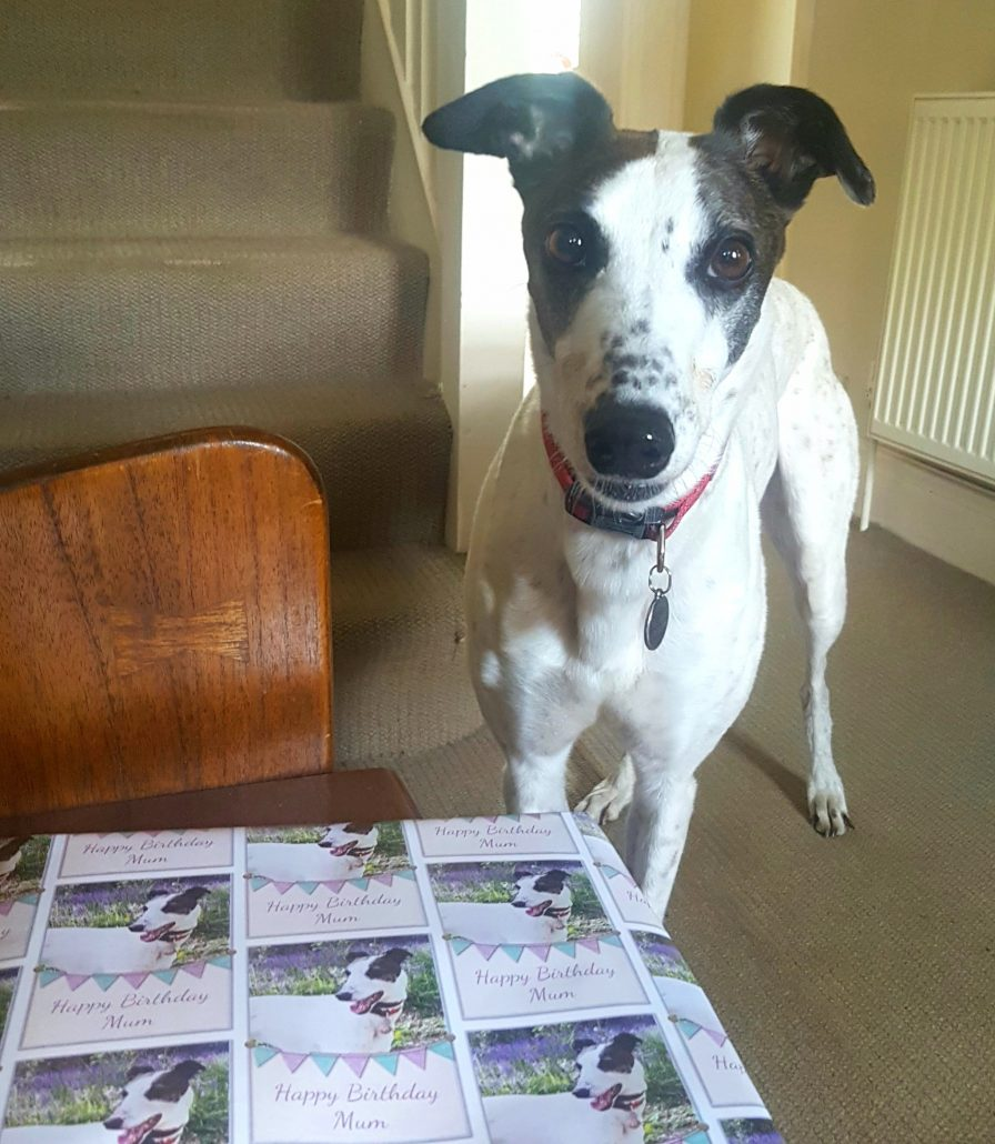 personalised-dog-wrapping-paper