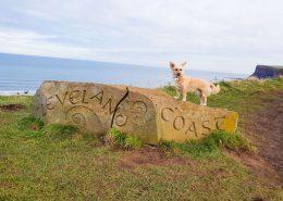 dog-walking-cleveland-coast