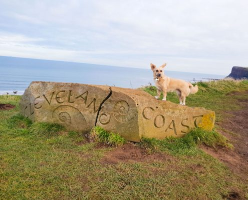 dog-walking-cleveland-coast